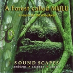AudioQuest ethernet kabels recensie - A Forest Called Mulu